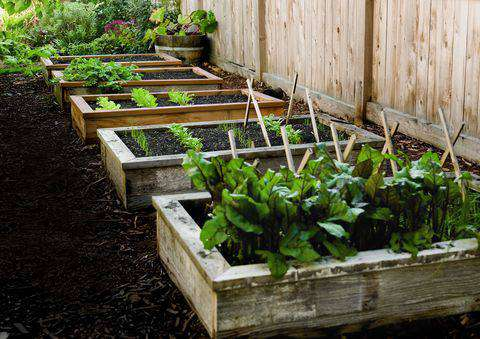 home gardening with less space